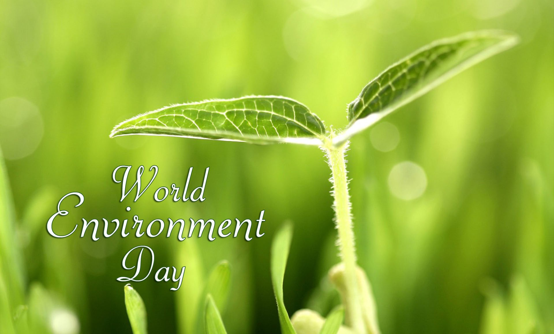 World Environment Day 2017 Wallpaper free download