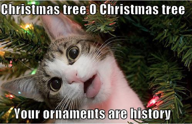 Christmas Tree O Christmas Tree Your Ornaments Are History Funny Christmas Memes 2017