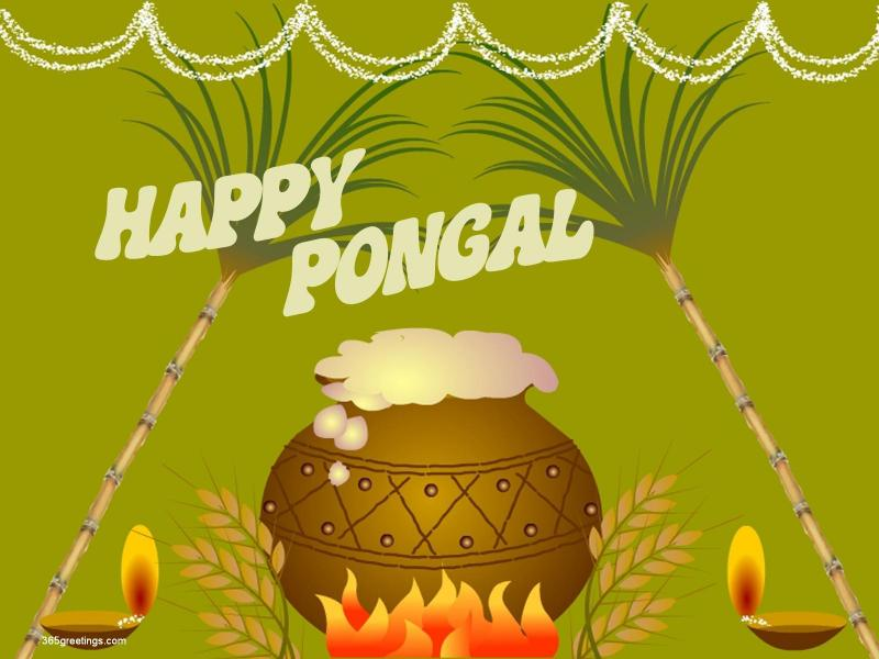 Pongal HD Images