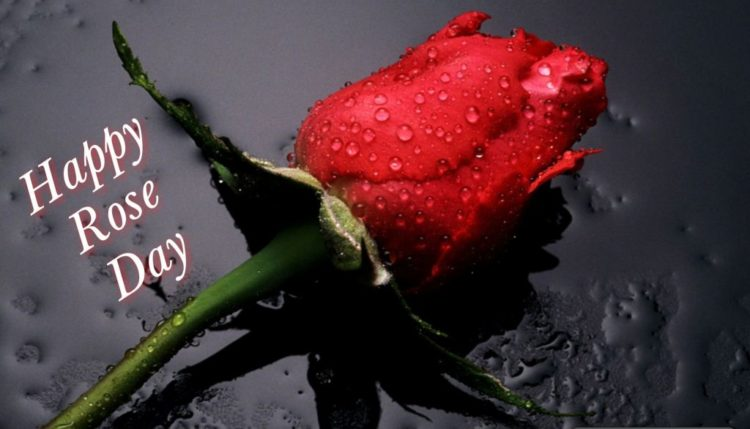 Rose Day 2018 Images for Lovers