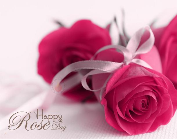 Rose Day HD Pics 2019