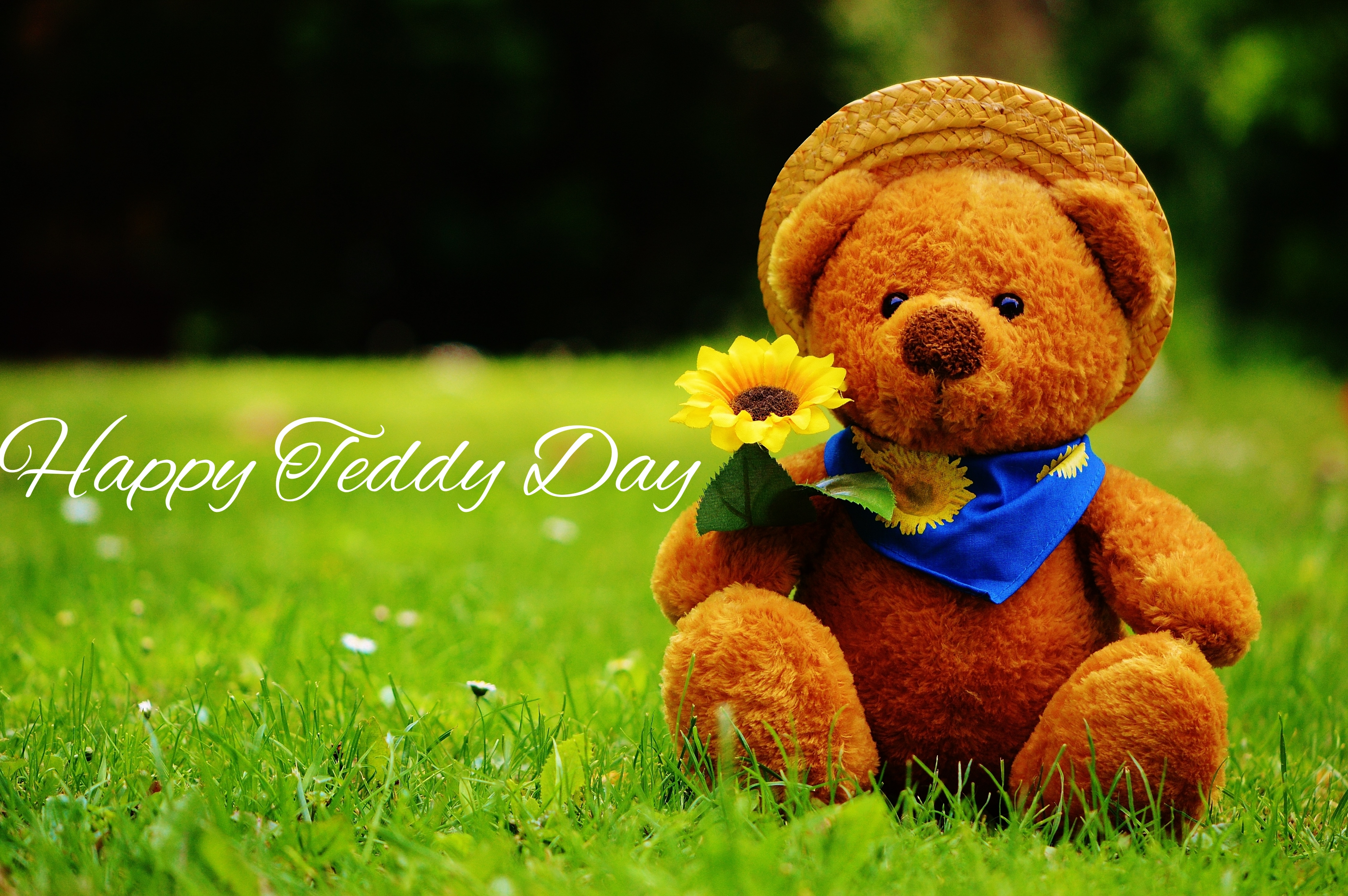 Teddy Images