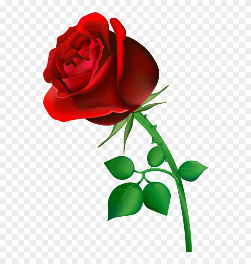 7th feb 2019 rose day images gif hd pics 3d photos