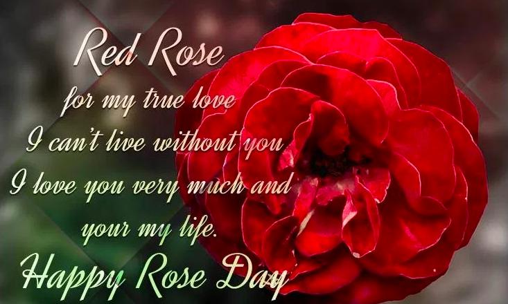 Rose Day 2019 Status